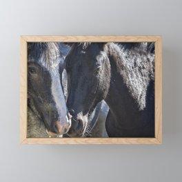 Bachelor Stallions - Pryor Mustangs Framed Mini Art Print