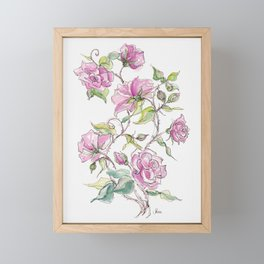 Pink Climbing Rose Framed Mini Art Print
