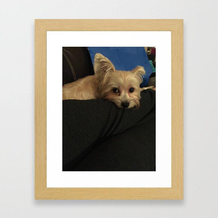 Bear The Wonderer Framed Art Print