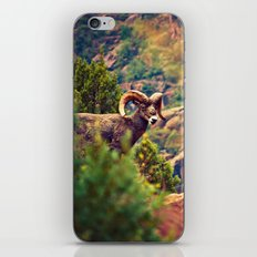 Bighorn iPhone & iPod Skin