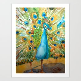 Peacock Outstretched Art Print