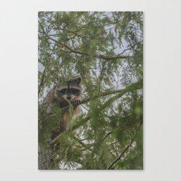 Daylight Bandit Canvas Print