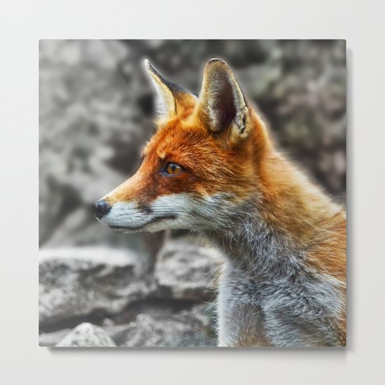 Friendly fox wildlife portrait Metal Print