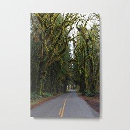 Hoh, Rainforest Drive Metal Print