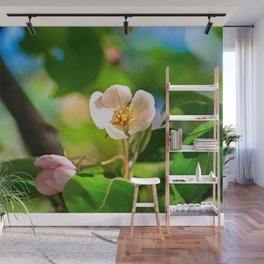 Pink crabapple flower, green leaves. Sunny day Wall Mural