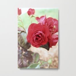 Vintage Red Rose Metal Print