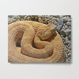 Albino Rattle Snake Metal Print