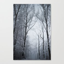 White branches (II) Canvas Print