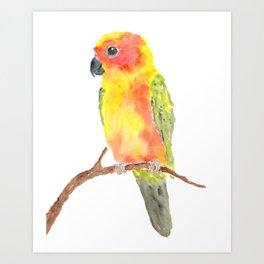 Parrot bird Art Print