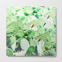 Flower Cacti garden Metal Print