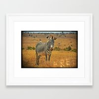 zebra Framed Art Prints featuring Zebra by minx267