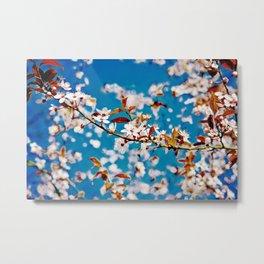 Spring Blossom I Metal Print