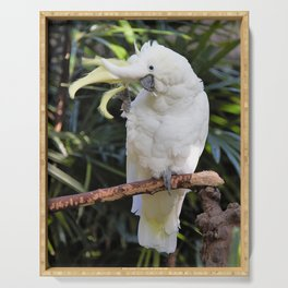 Sulfur-Crested Cockatoo Salutes the Photographer Serving Tray