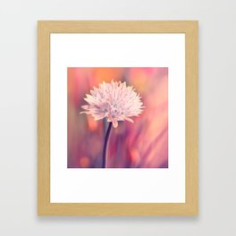 Chive blossom Framed Art Print