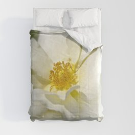 A white bloom. Comforters