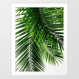 Palm Leaves #3 Art Print