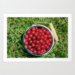 Sour cherrys fruit Art Print