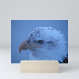 Young Eagle in Failing Light Mini Art Print