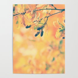 Oak nature photography Poster