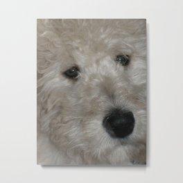 Cute Goldendoodle Puppy Dog Portrait Metal Print