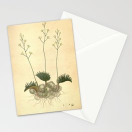 Flower eriospermum folioliferum Leaflet bearing Eriospermum Stationery Cards