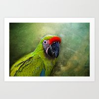 parrot Art Prints featuring parrot by lucyliu