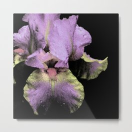 Iris No.1l by Kathy Morton Stanion Metal Print