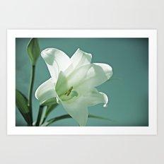 Seasonal Bloomer Art Print
