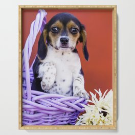 Tricolor Beagle Puppy Holding up Her Paw in a Purple Basket with Flowers in Front of Red Background Serving Tray