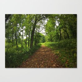 Crab Tree Falls Trail - NC Canvas Print