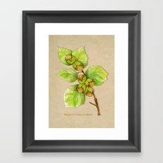 Corylus Avellana Framed Art Print