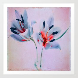 The flowers of my world Art Print