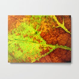 Macro Leaf no 5 Metal Print