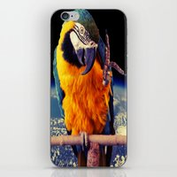 parrot iPhone & iPod Skins featuring Parrot by Cs025