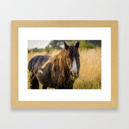 Autumn Horse Framed Art Print