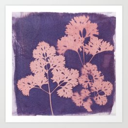 Cyanotype No. 10 Art Print