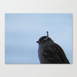 White crowned sparrow on my backyard fence Canvas Print