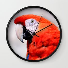 Macaw of Wonder Wall Clock