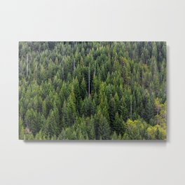 Wall of Trees Metal Print