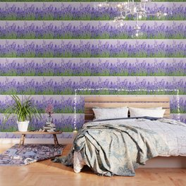 Lavender 15 Wallpaper