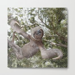 Tree hugging three toed Sloth Metal Print