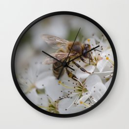 Bee on Cherry Blossom Wall Clock