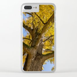 L'albero di Ferrara Clear iPhone Case