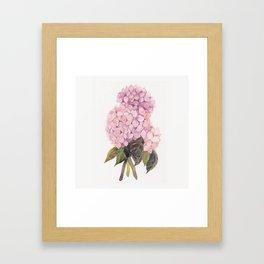 watercolor pink hydrangea Framed Art Print