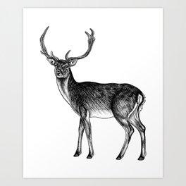 Fallow deer stag - ink illustration Art Print