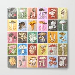 Mushroom Study Metal Print