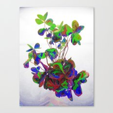 Cut clovers, databending/vector painting/dream smoothing rendition. Canvas Print