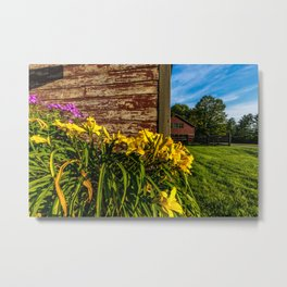 Yellow Flowers - Red Barn Metal Print