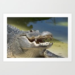Alligator Smile Art Print