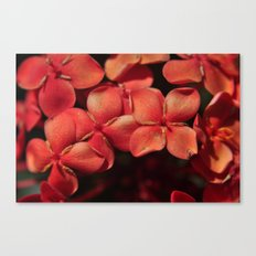 shiny flowers Canvas Print